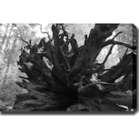 'Root' Gallery-wrapped Photography Canvas Art - Multi