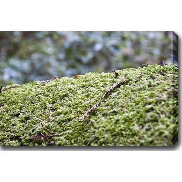 'Green' Gallery-wrapped Photography Canvas Art
