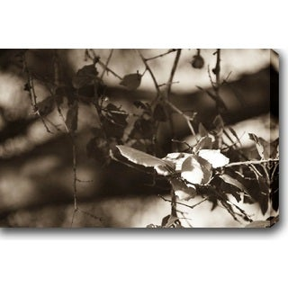 'Fall Leaves' Gallery-wrapped Photography Canvas Art