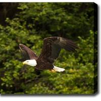 'Alaska Bald Eagle' Canvas Art