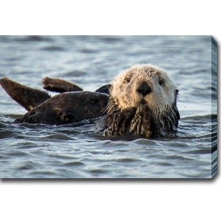 'California Sea Otter, Monterey Bay' Gallery-wrapped Photo Canvas Art