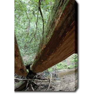 'Tree, Redwood National Park' Canvas Art