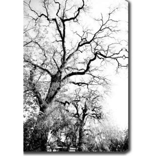 'Branches' Canvas Art