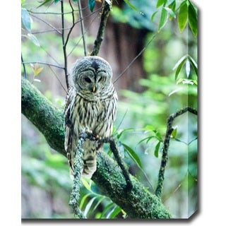 'Owl, Redwood National Park' Canvas Art