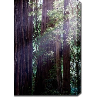 'In the Redwoods' Canvas Art