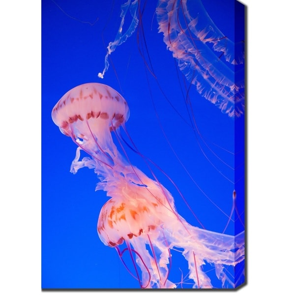 'Jellyfish' Canvas Art