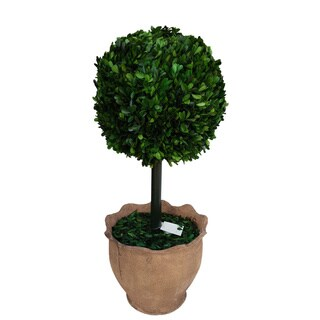 29-inch Preserved Boxwood Ball in Clay Pot
