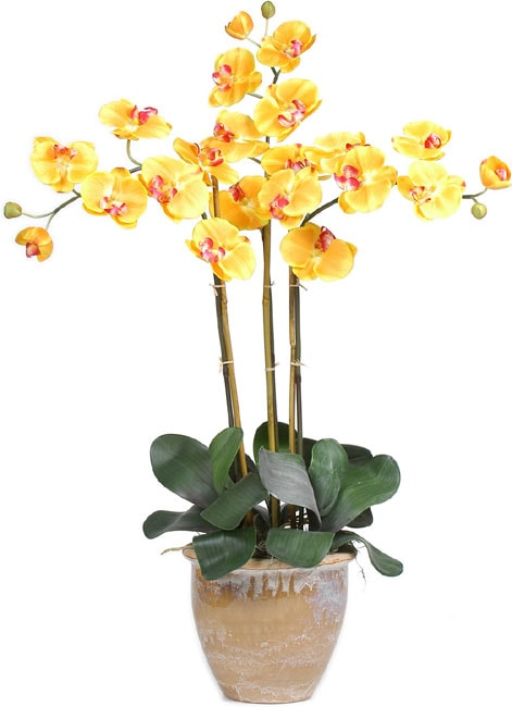 Triple-stem Phalaenopsis Silk Orchid Plant
