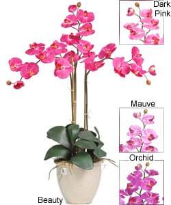 Triple-stem Phalaenopsis Silk Orchid Plant - Thumbnail 1