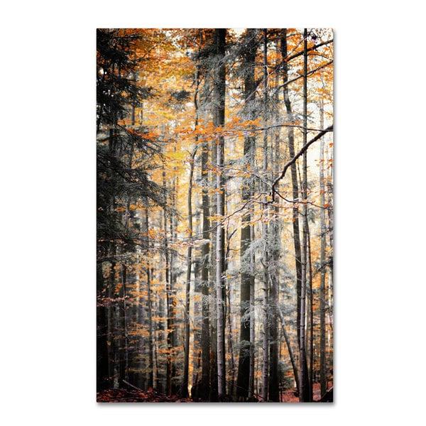 Philippe Sainte-Laudy 'Autumn Tones' Canvas Art