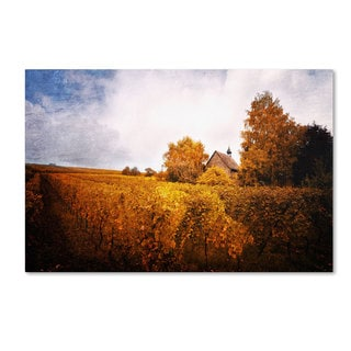 Philippe Sainte-Laudy 'Light in Vineyards' Canvas Art
