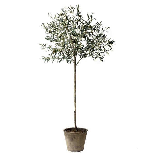 Sage & Co Tall Green Olive Tree with Pot - Free Shipping ...