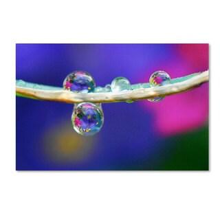 Steve Wall 'Double Drops' Canvas Art