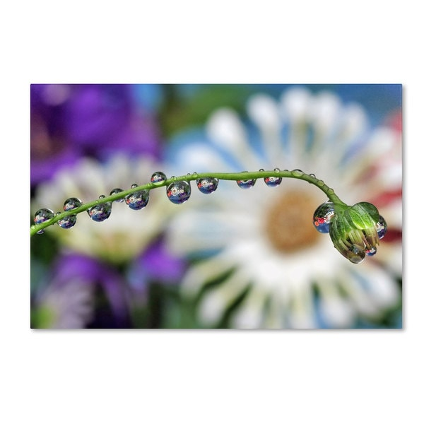 Steve Wall 'A Herd of North American Water Drops' Canvas Art - Multi