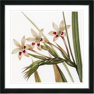 Studio Works Modern 'Vintage Botanical 43' Framed Art Giclee Print (4 options available)