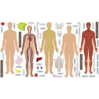 Peel, Play & Learn Human Body Play Set