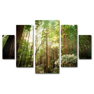 Ariane Moshayedi 'Muir Woods' 5-piece Canvas Art