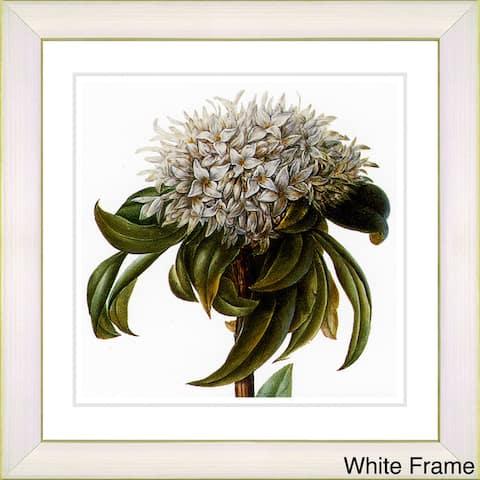 Zhee Singer 'Vintage Botanical No 37 - White' Framed Fine Art Print