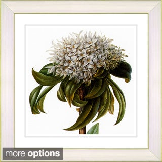 Zhee Singer 'Vintage Botanical No 37 - White' Framed Fine Art Print (4 options available)