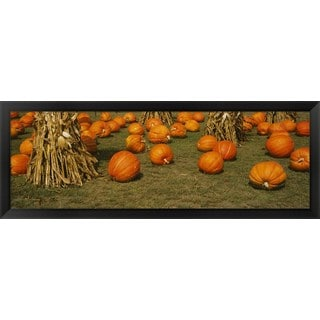 'Corn plants with pumpkins in a field, South Dakota' Framed Panoramic Photo