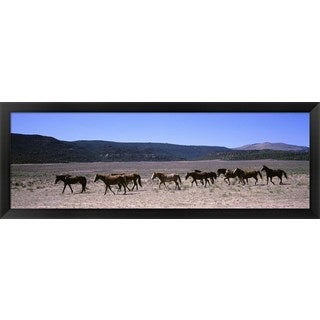 'Horses running in a field, Colorado' Framed Panoramic Photo
