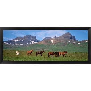 'Horses grazing, Borgarfjordur, Iceland' Framed Panoramic Photo