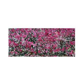 Kurt Shaffer 'Pink Autumn' Canvas Art