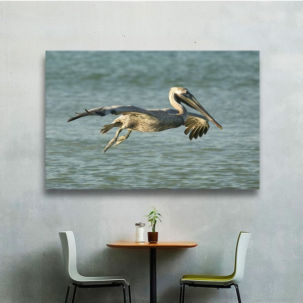 Lindsey Janich 'Pelican 11a' Gallery-Wrapped Canvas