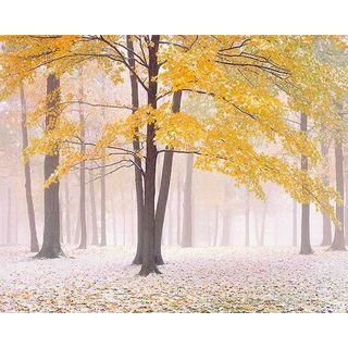 Jim Becia 'Early Autumn' Canvas Art