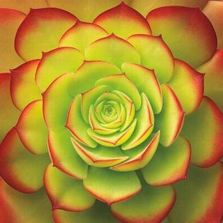 Jan Bell 'Fiery Succulent' Canvas Art