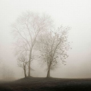 Nicholas Bell 'Four Trees' Canvas Art