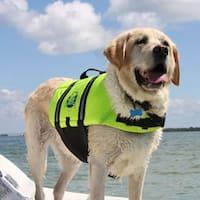 Paws Aboard Yellow Nylon/Foam Dog Life Jacket