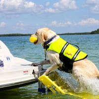 Pawz Pet Doggy Boat Ladder
