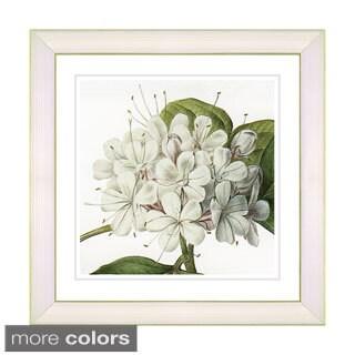 Zhee Singer 'Vintage Botanical No 047 - White' Framed Fine Art Print (4 options available)