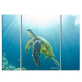 Christopher Doherty 'Sea Turtle' Canvas Wall Art (3 Piece)