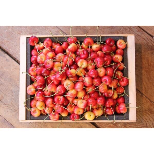 Fresh Organic Washington Rainier Cherries