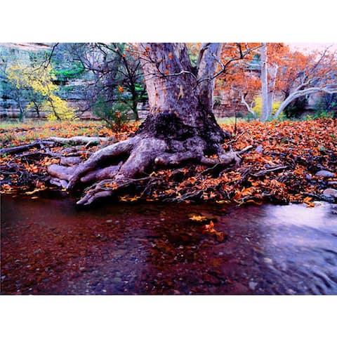 Dean Uhlinger 'Aravaipa Canyon Creek' Unwrapped Canvas