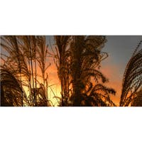 Dean Uhlinger 'Summer Grass' Unwrapped Canvas - Multi