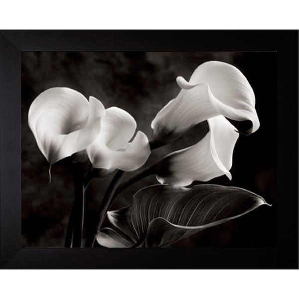 Fabulous Sondra Wampler 'Calla Lilies No. 1' Framed Wall Art Print - Free  CL31