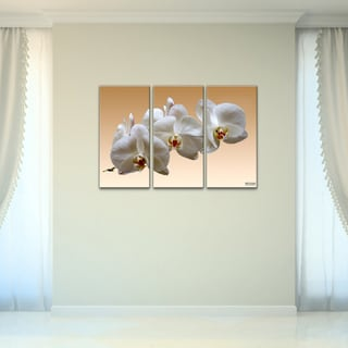 Bruce Bain 'White Orchid' Canvas Wall Art (3-piece Set)