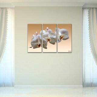 Bruce Bain 'White Orchid' Canvas Wall Art (3-piece Set)
