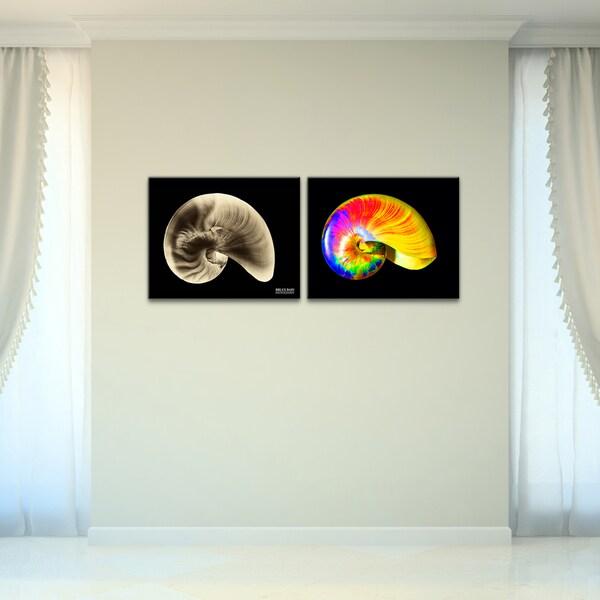 Bruce Bain 'Shells II' 2-piece Set Canvas Wall Art