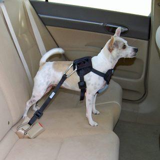 Bergan Dog Travel Harness