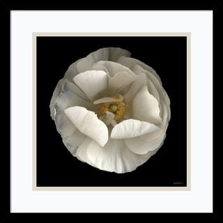 Framed Art Print 'Folded Ranunculus' by Neil Seth Levine 17 x 17-inch