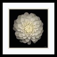 Framed Art Print 'Dahlia 22' by Neil Seth Levine 17 x 17-inch