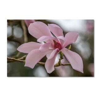 Pierre Leclerc 'Magnolia' Canvas Art