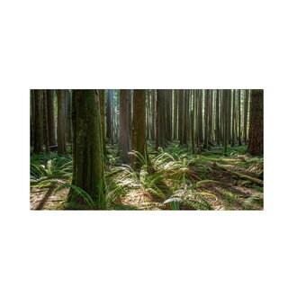Pierre Leclerc 'Forest' Canvas Art