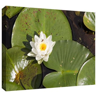 Cody York 'Lilly Pad' Gallery-wrapped Canvas
