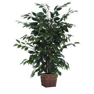 Christopher Knight Home 4-foot Ficus in Square Willow Container