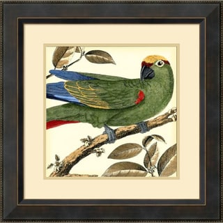 Martinet 'Tropical Parrot I' Framed Art Print 23 x 23-inch